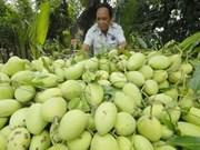 L'Australie s'apprête à ouvrir sa porte aux mangues vietnamiennes