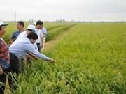 Variétés de riz : Le Vietnam est un marché stratégique de Syngenta en Asie