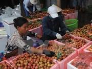 L'Australie reconnaît le Centre d'irradiation de litchis vietnamiens