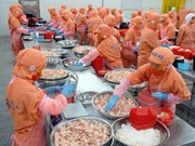 Augmentation possible des exportations de crevettes cette année
