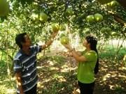 Dông Nai: l'agriculture intéresse les investisseurs étrangers
