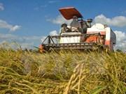 Développement de riz de qualité pour l'export