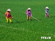 Agriculture: comment le Vietnam s'adapte-t-il au changement climatique?