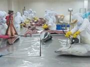 Reprise des exportations de thon