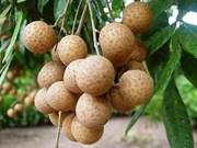 Des longanes frais du Vietnam expédiés en Malaisie