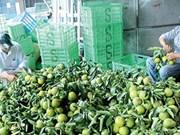 Dans la province de Hâu Giang: Les fruits de la croissance
