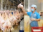 Promotion de l'export de viande de poulet au Japon