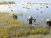 BM : consultation sur la stratégie de coopération nationale dans le delta du Mékong