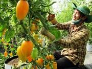 Le secteur agricole du Vietnam séduit les investisseurs japonais