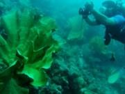 L'Indonésie et les États-Unis coopèrent dans la conservation de l'habitat marin