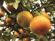 Dông Tháp, terre fertile pour l'essor de l'agriculture