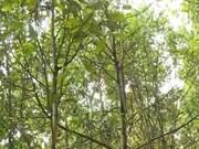 Le Japon réalise de nombreux projets forestiers au Vietnam