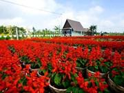 Escapade à Sa Dec, le grand jardin floral du Delta du Mékong
