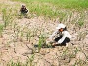 Changements climatiques: l'ONU s'engage à coopérer à long terme avec le Vietnam