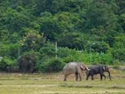 L'éléphanteau le plus attendu du Tây Nguyên