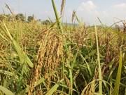 L'agriculture, élément vital pour une croissance durable