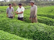 Les entreprises japonaises veulent investir dans l'agriculture biologique à An Giang