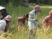 Cambodge : un projet de 61 millions de dollars pour soutenir les petits producteurs agricoles