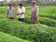 Le groupe japonais Horimasa veut investir dans l'agriculture bio et l'éducation à An Giang