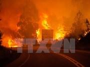 Incendies de forêt : message de sympathie au Portugal