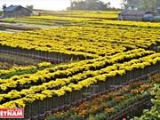 Une région florale du Sud