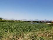 Achèvement de la décontamination de l'aéroport de Da Nang (deuxième phase)