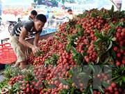 Les fruits frais en tête des exportations vietnamiennes vers le marché chinois