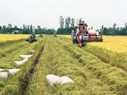 Assurer la sécurité alimentaire dans le contexte du changement climatique