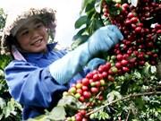 Les exportations nationales de café se portent bien
