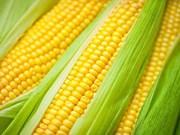 L'Argentine, 1er fournisseur du Vietnam en aliments pour animaux et maïs