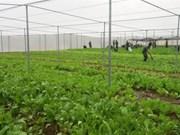 La production de semences, une priorité pour la mégalopole du Sud