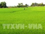 Riziculture: Hau Giang expérimente des produits bio sud-coréens