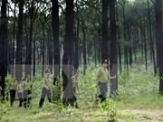 Pour protéger les forêts, Thua Thiên-Huê et l'USAID coopèrent dans le projet Truong Son Xanh