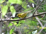 La réserve naturelle de Xuân Liên protège ses espèces d'oiseaux rares et menacés
