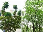Hanoï: plantation d'arbre à l'occasion de la Fête nationale finlandaise
