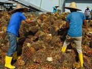 La Malaisie et l'Indonésie s'inquiètent de la discrimination de l'UE à l'égard de l'huile de palme