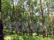 Des progrès dans le développement forestier
