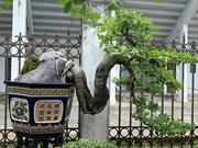 Exposition de plantes ornementales et d'oiseaux à Hanoi