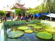 La pagode abritant une sorte de lotus géant dans le delta du Mékong