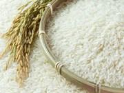 Le Vietnam remporte une adjudication d'exportation de 141.000 tonnes de riz en Indonésie