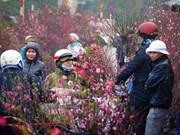 Le marché aux fleurs de Quang Ba est l'une des 14 destinations idéales pour le Tet