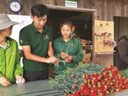Un ingénieur japonais fasciné par les fleurs de Dà Lat