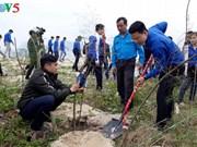 Planter des arbres pour protéger l'environnement