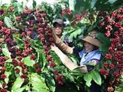 Vers un développement durable de la filière café