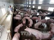 Le secteur d'élevage entre opportunités et défis du CPTPP