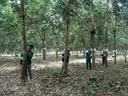 Le Cambodge salue les contributions des compagnies de caoutchouc à Kampong Thom
