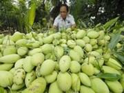 Des mangues vietnamiennes seront exportées vers Singapour