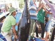 Le Vietnam agit pour répondre aux exigences en matière de lutte contre la pêche INN