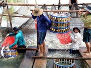 Le chef-lieu frontalier de Kiên Tuong fait peau neuve