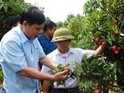 Bac Giang : renforcer les mesures pour la consommation de litchi